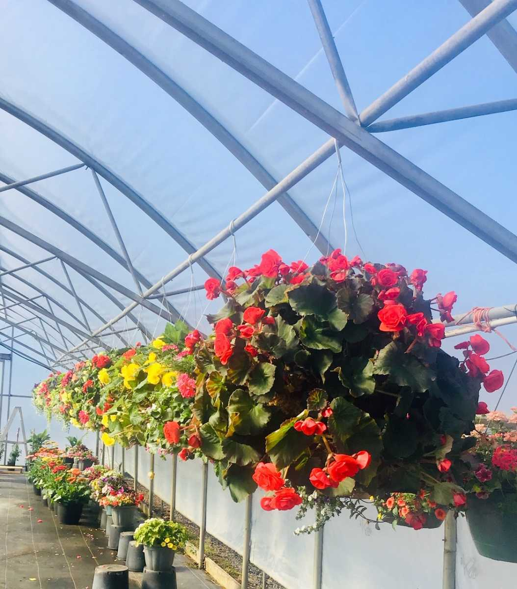 row of hanging baskets
